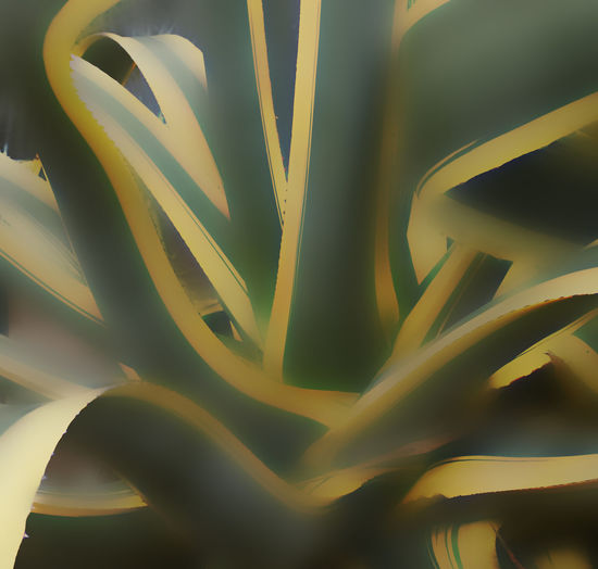 Agave In And Out Roller Coaster Soft Spines Softness Spiral Staircase Swirling Swirly Variegated Leaves