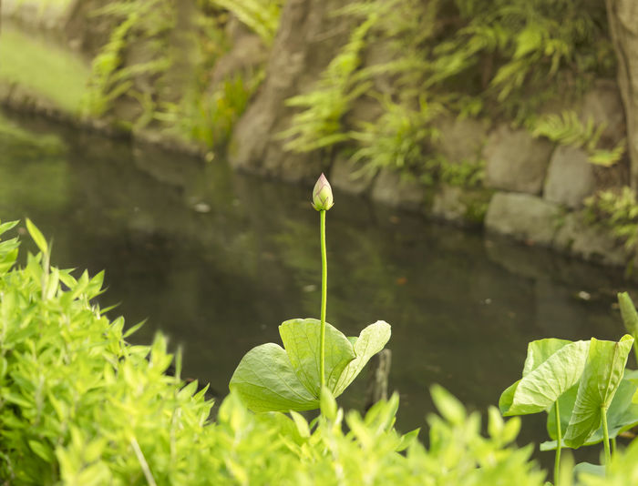 Close-up of plant against lake