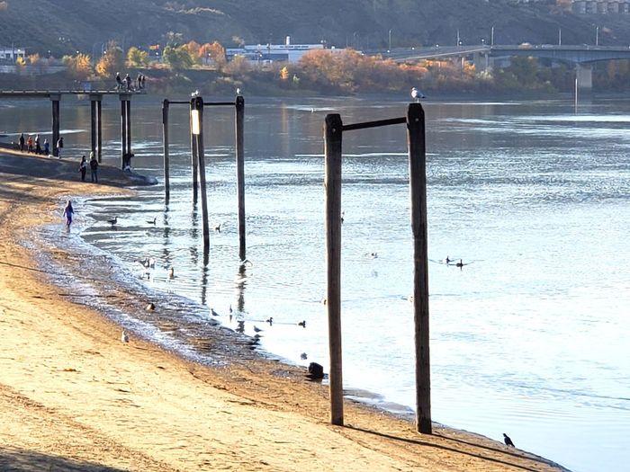 Riverside Beach Sand Wood Pole Seagulls Cityscape Sky Sky And Clouds Sunlight Water Riverside Bikeride