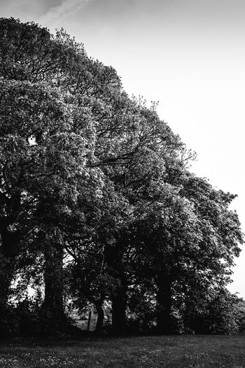 Low angle view of large tree on field against sky