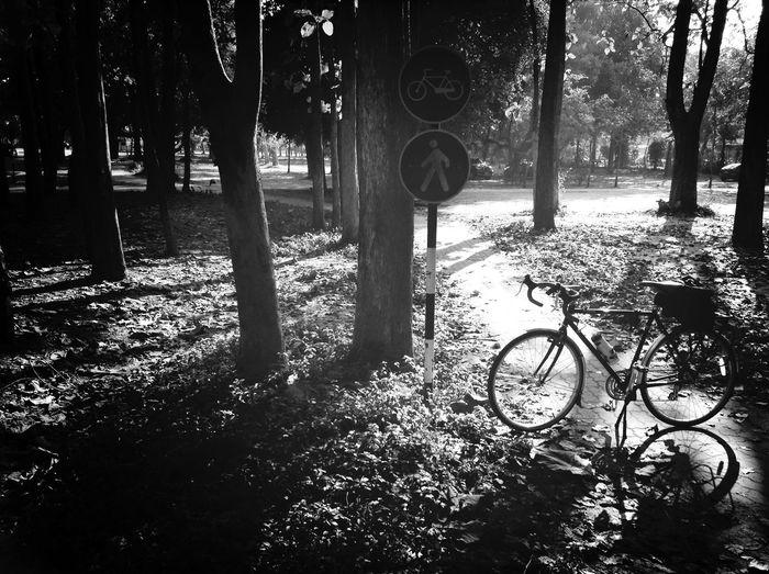 Bicyclove Share