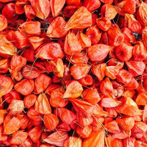 Ladyfruit Fruit