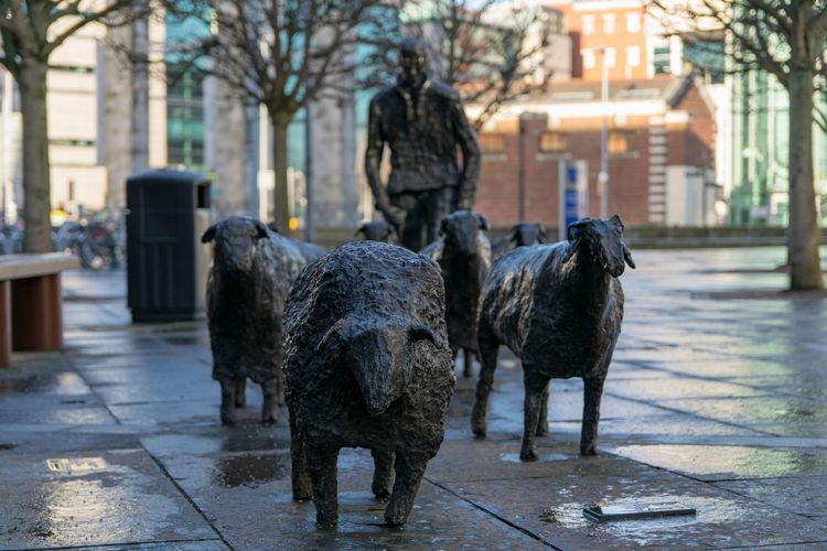 Dogs on street
