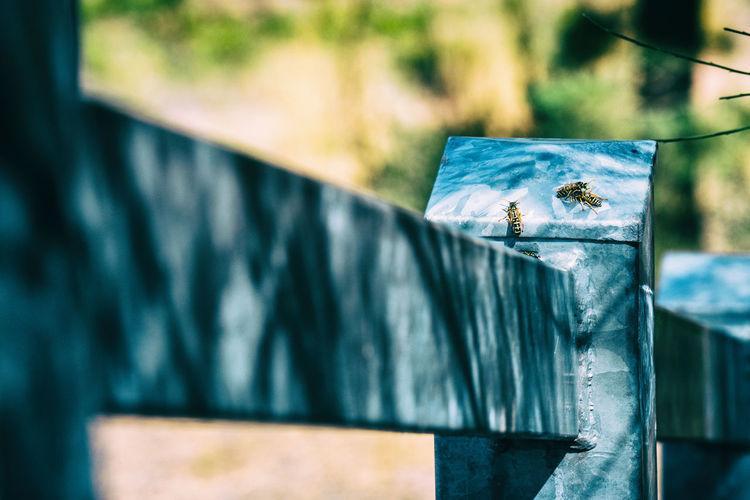 Wasp on an iron fence in summertime