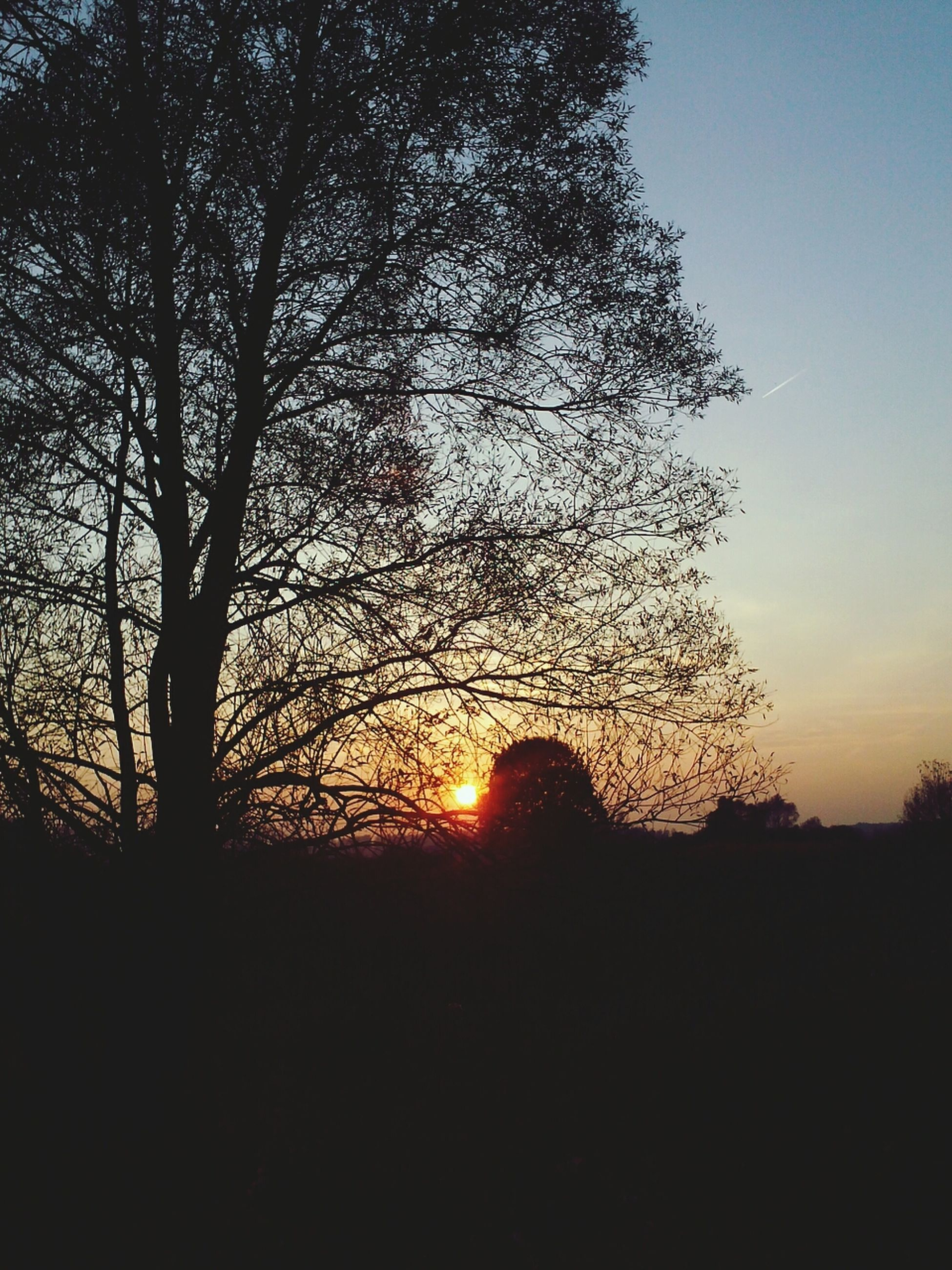silhouette, sunset, tree, tranquility, sky, tranquil scene, beauty in nature, scenics, nature, orange color, branch, low angle view, idyllic, dark, landscape, sun, sunlight, outline, outdoors, growth