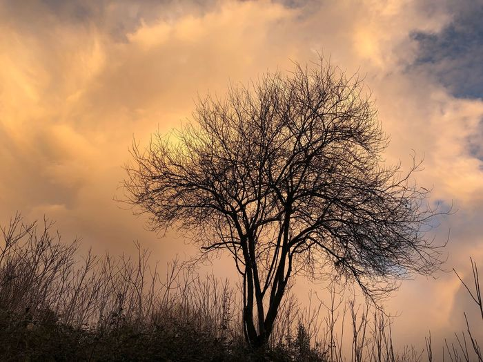 Bare Tree Tranquility Majestic Lone Beauty In Nature Tranquil Scene Nature