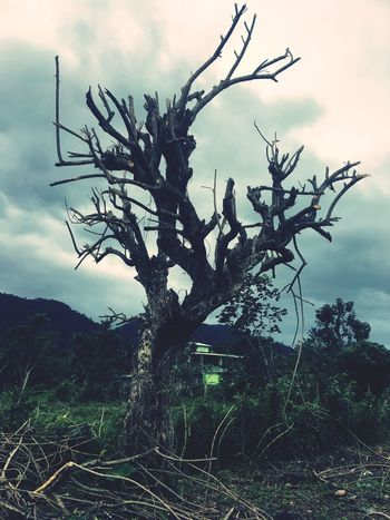 Tree of death Plant Sky Tree Cloud - Sky Nature Tranquility No People Beauty In Nature Bare Tree Scenics - Nature Day Tranquil Scene Environment Silhouette Low Angle View Non-urban Scene Growth Branch Outdoors Landscape