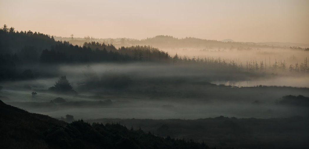 Fog Foggy Morning Foggy Foggy Weather Oregon Oregon Coast Oregon Coast Highway Fog In The Trees Sunrise Beauty In Nature Tranquil Scene Scenics - Nature Tranquility Sky Tree No People Hazy  Plant Non-urban Scene Environment Nature Mountain Idyllic Outdoors Remote Landscape