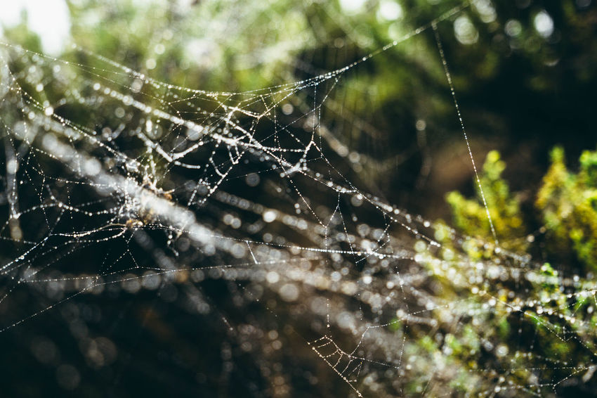 Animal Markings Beauty In Nature Close-up Cob Web Complexity Day Dew Drop Focus On Foreground Fragility Freshness Full Frame Intricacy Natural Pattern Nature No People Outdoors Plant Scenics Spider Web Spiderweb In Morning Dew Tranquility Water Wet