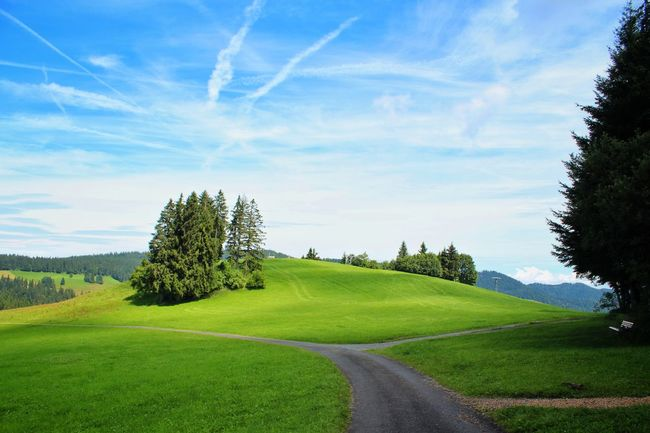 Cloud - Sky Rural Scene Tree Landscape Nature Sky Grass Beauty In Nature Scenics Green Color Outdoors Tranquility Agriculture Day No People Summer Blue Flower Freshness Hikingphotography Traveling Been There Green Swiss Outdoor
