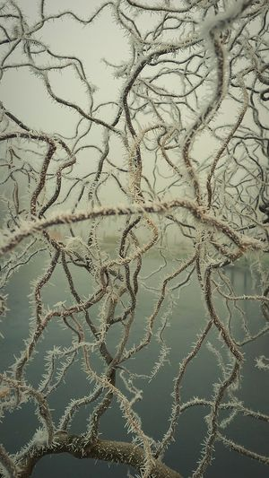"""Icy Nerve System!"" Shades Of Winter Roll On Springtime 🐦 Willow Tree Willow Branches Hoarfrost Frozen Wintertime Winter Wonderland Winter Trees Winter Frosty Mornings Focus On Foreground NervousSystem Backgrounds Pattern Full Frame Close-up Textured  Nature Concentric"
