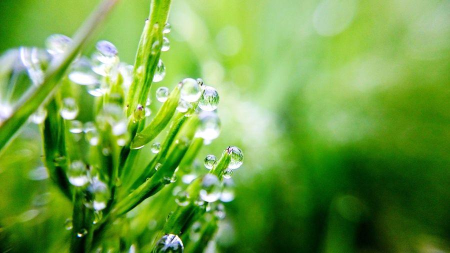 Goodmorning 雫ℓσνє♡ Rain Drop♡ おはようございます♡゙素敵な1日を.•*¨*•.¸¸♬