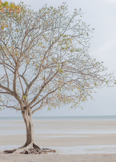 Tree Sky Tranquility Beauty In Nature Water Tranquil Scene Plant Nature Scenics - Nature Land Branch Day No People Sea Non-urban Scene Horizon Growth Outdoors Beach