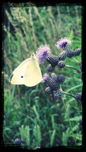 Fantastic Exhibition EyeEm Best Shots - Nature EyeEm Nature Lover Butterfly