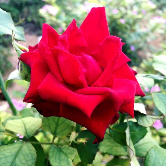 Flowers Eyem Best Shots Plants And Flowers by my friend