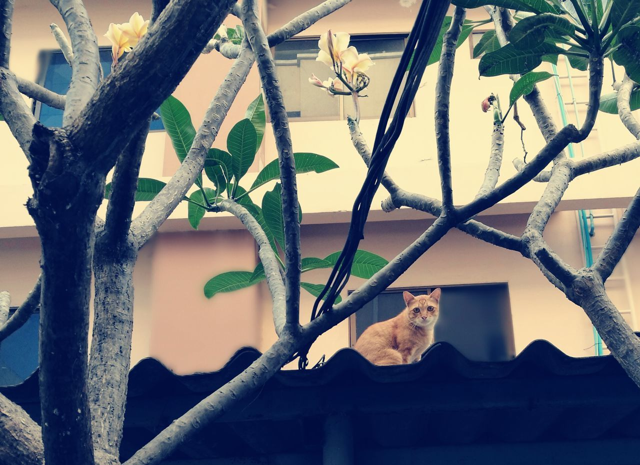 one animal, mammal, animal themes, tree, domestic cat, day, outdoors, built structure, no people, architecture, branch, feline, plant, animals in the wild, nature, pets, building exterior, domestic animals, sitting, perching, sky