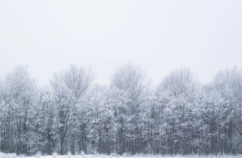 Nature Winter Beauty In Nature Outdoors Tranquility Cold Temperature No People Snowing