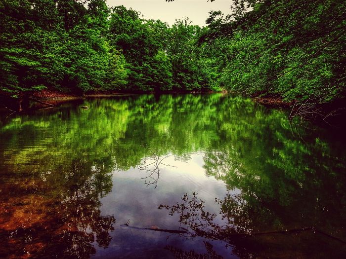 Treegasmic Tuesday Nature_collection EyeEm Nature Lover Water Reflections