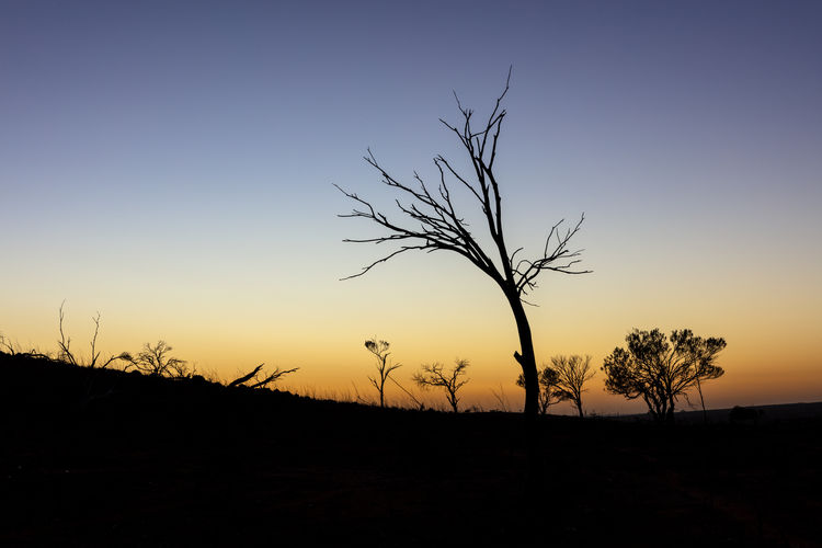 Bare Tree Dawn Dead Plant No People Orange Color Scenics - Nature Silhouette Sky Sunrise Tranquil Scene Tranquility Tree