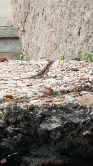 Beautiful Skin Camouflage Animals Day Lizard Nature Outdoors Reptile Rugged Stone
