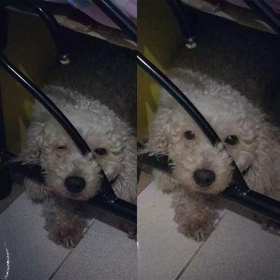 Yung totoo? May pinaglalaban ka moymoy? Dogsofinstagram Dogs DogLove