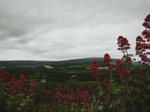 Countryside Ireland Ireland🍀 Feel The Journey Original Experiences Roadtrip Road Trip Flowers Mountains Hills Exploring Adventure Countryside Uk Gloomy Day On The Way A Bird's Eye View Finding New Frontiers The Great Outdoors - 2017 EyeEm Awards