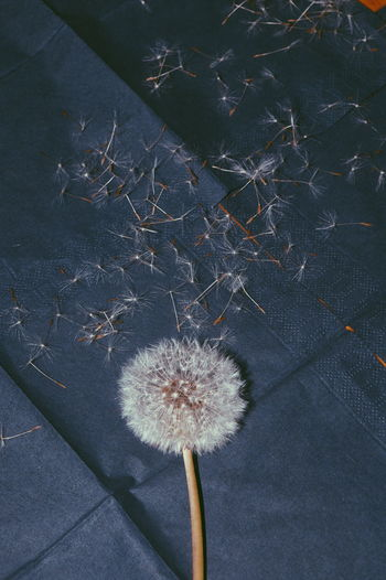 Everything will be okey in the end. If it's not okay, it's not the end... Beauty In Nature Flowering Dandelion Very Lucky For You <