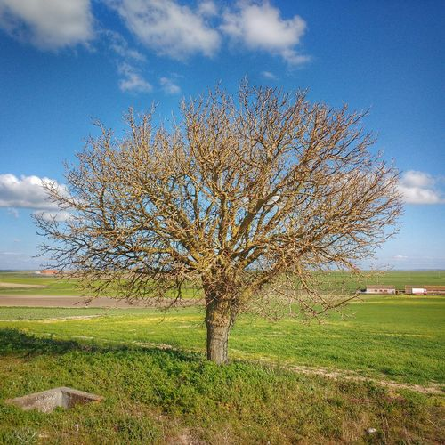Single tree on grassy field