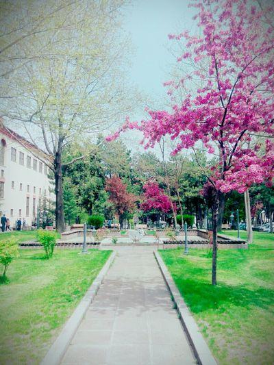 Üniversite dediğiinn :-)