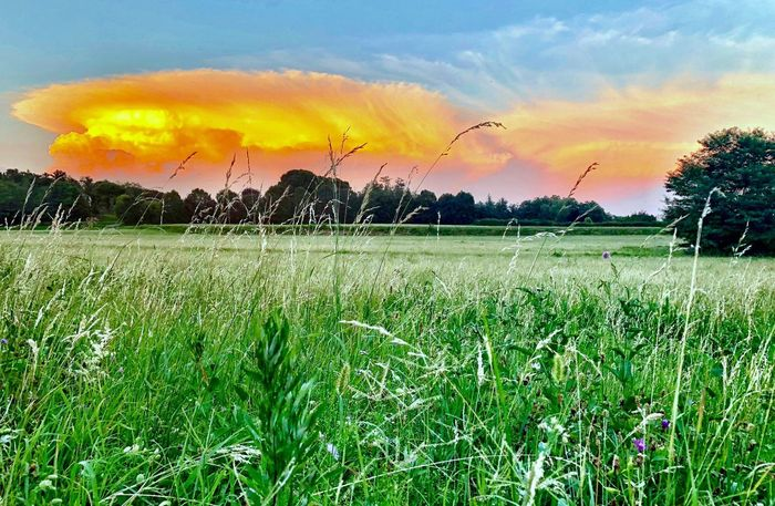 Nuvole strane, campagna briantea Plant Sky Beauty In Nature Cloud - Sky Landscape Growth Environment Tranquility Tranquil Scene Scenics - Nature Tree Nature Land Grass No People Field Sunset Green Color Rural Scene Agriculture