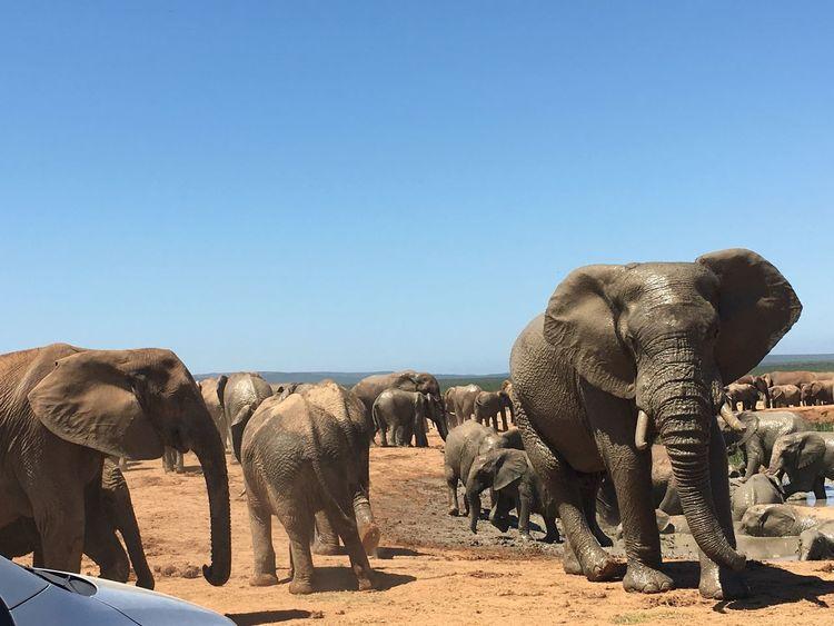 Elephant Nature Addoelephantpark Love