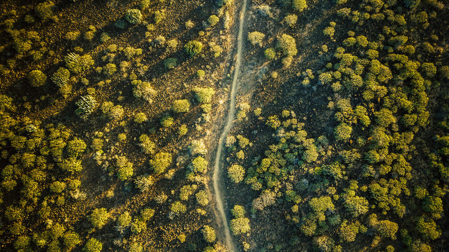 aerial top vertical view of landscape with cactus and footpath, environment and nature Plant Beauty In Nature High Angle View Tree Growth Day No People Yellow Nature Tranquility Full Frame Land Environment Landscape Tranquil Scene Scenics - Nature Green Color Outdoors Aerial View Sunlight Flight Drone  Footpath Ground Above Autumn Cactus Discovery Island Mountain Range Natural Desert Arid Climate Tropical Climate Landscape - Scenery Tranquility Horizontal