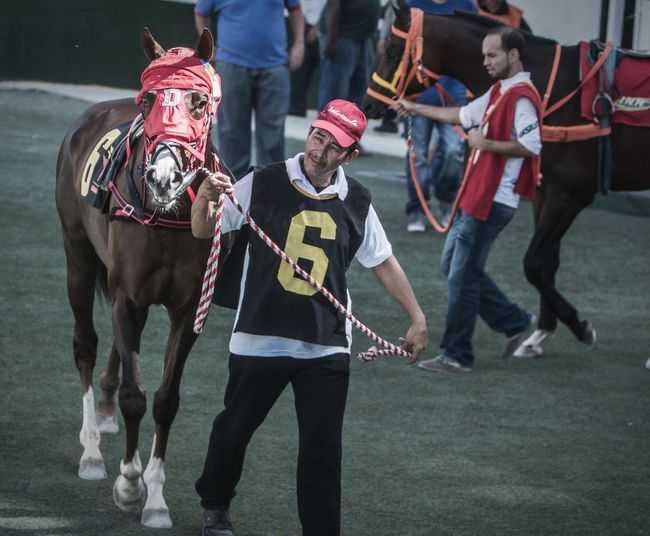 Sunday with horses Sports Photography Horse Horseriding Caballos