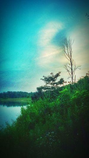Lush Landscape.