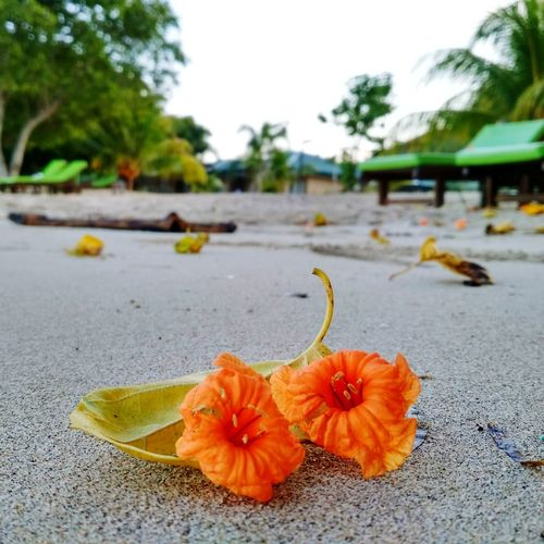 No People Flower Nature Outdoors Tree Day Freshness Fruit Beach Healthy Eating Close-up Beauty In Nature Flower Head Sky