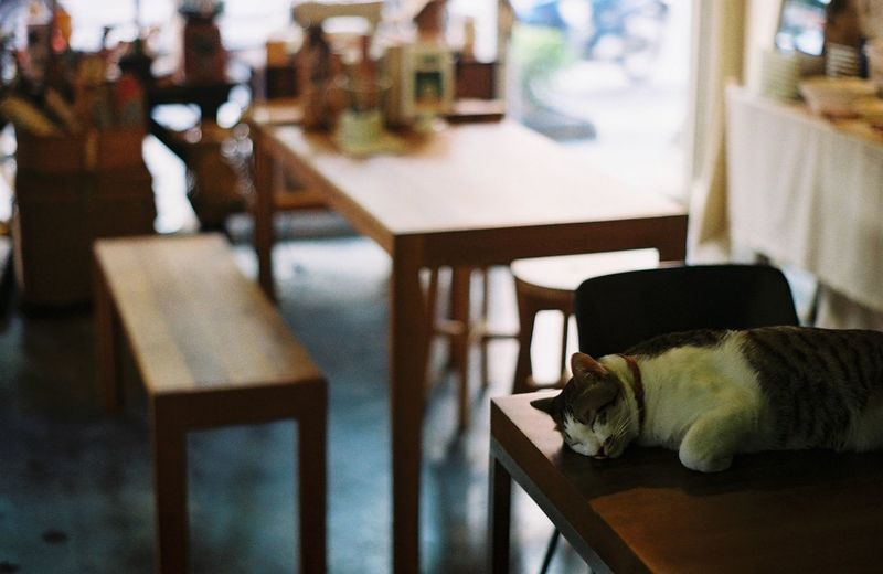 Animal Themes Cat Chair Close-up Day Domestic Animals Domestic Cat Feline Film Film Photography Focus On Foreground Indoors  Mammal No People One Animal Pets Relaxation Table