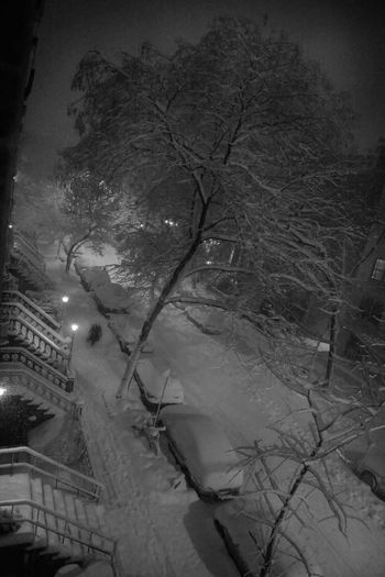 A man walks down 22nd street during a blizzard 22nd Street Chelsea Manhattan New York City Snow ❄ Architecture Bare Tree Blizzard Branch Cold Temperature Devin Delano Illuminated Low Angle View Nature Night No People Outdoors Sky Snow Snowing Tree Winter