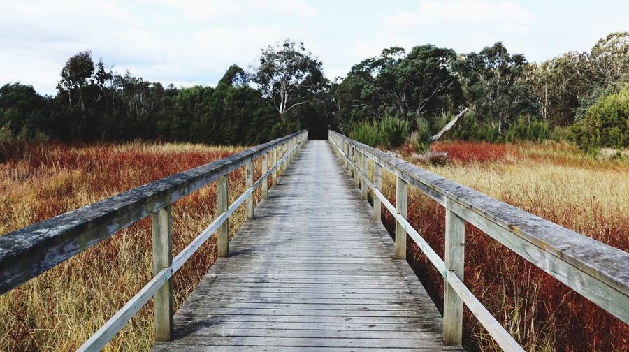 Bridge Nicipics Photoart Australia Emotional Photography Waytoheaven Tree Plant The Way Forward Sky Direction Nature Diminishing Perspective Land Growth No People Connection Bridge Cloud - Sky Outdoors Beauty In Nature Field Day Tranquil Scene