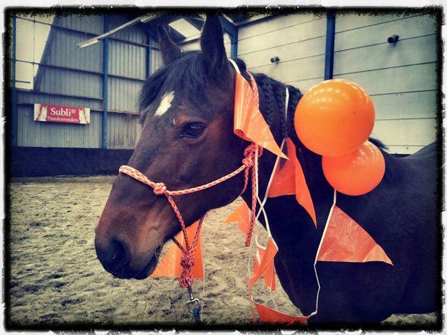 Love Horse My Horse Haflo