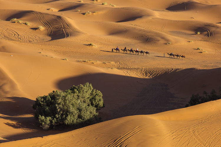 High angle view of camel train in desert
