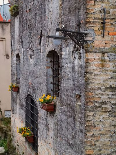 Potted plant on wall of old building