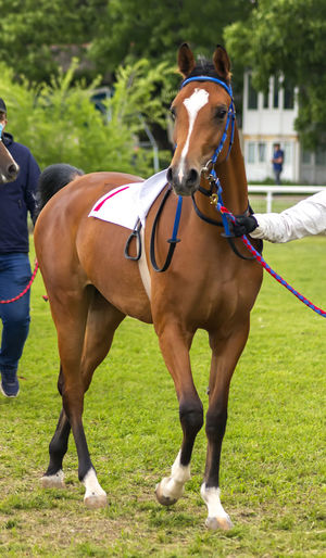 Horse riding horses on field