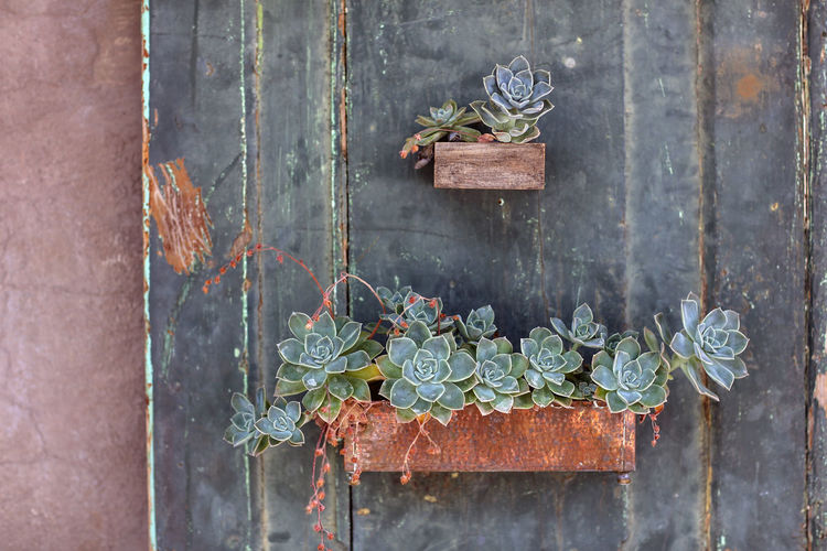 Succulents Day Neiu Bethesda No People Outdoors Plant Box Plants South Africa Succulent Succulents Wood - Material
