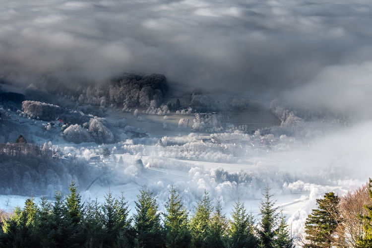 Panoramic view of pine trees against sky during winter