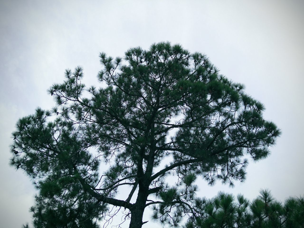 tree, nature, low angle view, growth, beauty in nature, branch, sky, no people, forest, outdoors, day, height