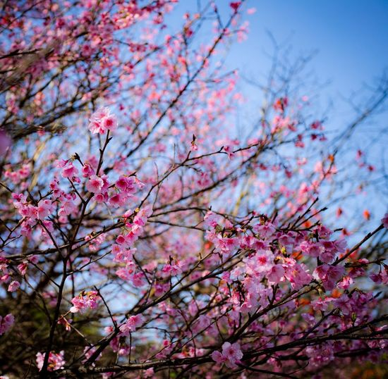 Something Pink Flower Flowering Plant Plant Pink Color Blossom Tree Beauty In Nature Springtime Fragility Low Angle View Freshness No People Nature Day Outdoors
