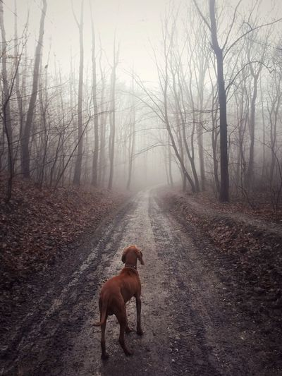 Rear view of dog on dirt road in forest during foggy weather