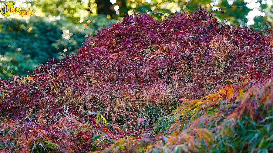 Autumn Bunter Garten Nature Pflanze# Plant Beauty In Nature Day Focus On Foreground Fragility Freshness Growth Leaf Nature No People Outdoors Tree