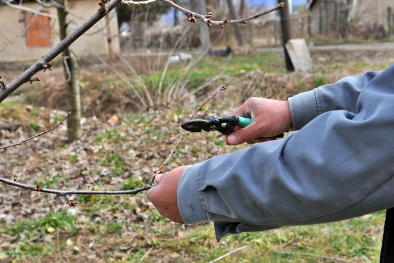 Cropped hands of man cutting branches outdoors