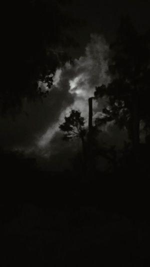 looking up Cloud Artistry Can You See It? Sky Talk Cloud Speak Interpretation Cloud - Sky Blackandwhite Night Moonlight Island WOW Serious Tree Spooky Ominous Sky Atmospheric Mood Dramatic Sky Sky Only Full Moon Cloudscape Moody Sky Atmosphere Romantic Sky